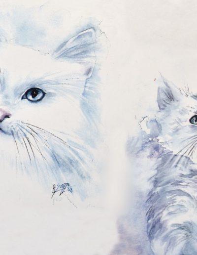 Due gattini azzurri