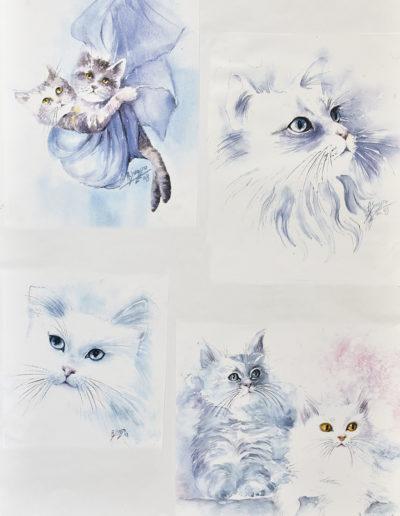 Gattini azzurri