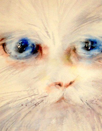 Il gatto dagli occhi blu